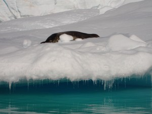 Antarctica (127)