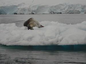 Antarctica (143)