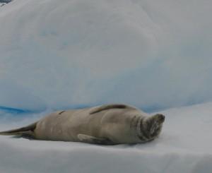 Antarctica (158)