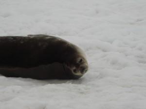 Antarctica (166)